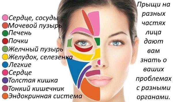 Зоны прыщей на лице и органы